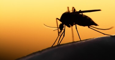 Malaria, Vector-Borne, Diseases, Dengue Fever,